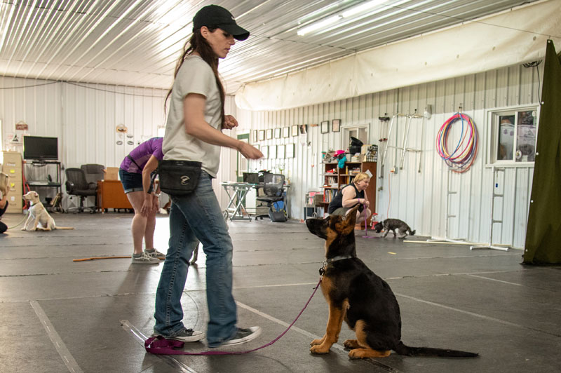 Training Carlson Canine Camp